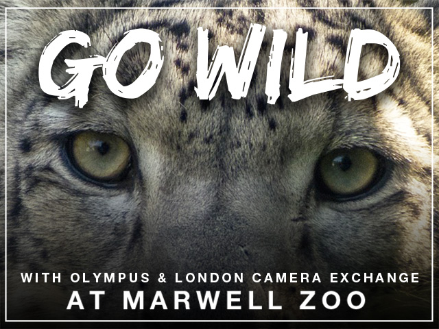 Marwell Zoo experience day