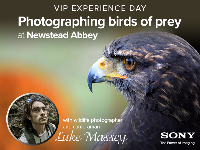 Birds of Prey VIP Photo Experience Day