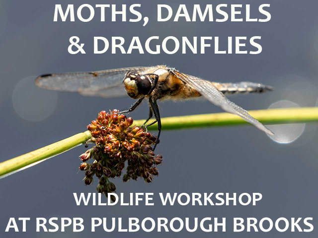 Moths, Damsels & Dragonflies Workshop at RSPB Pulborough Brooks