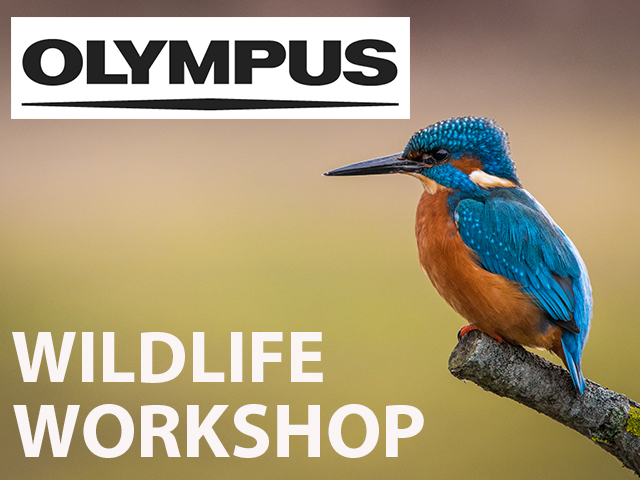 *Sorry this event is now POSTPONED, a revised date TBA  Olympus Telephoto Wildlife Workshop at Arundel Wetland Centre
